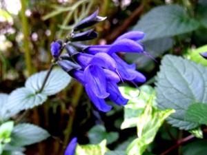 01flower