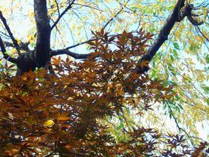 Leaves09