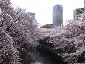 Sakura201203