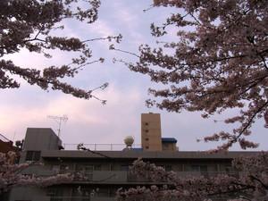 Sakura201207