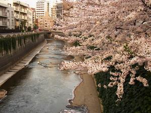 Sakura201208
