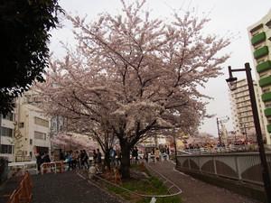 Sakura201209_2