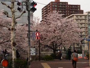 Sakura201211