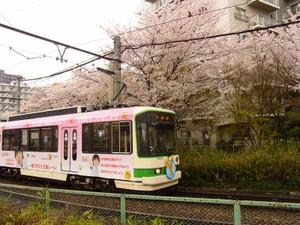 Sakura201214